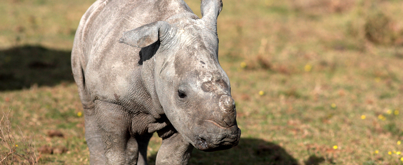 rhino-orphanage
