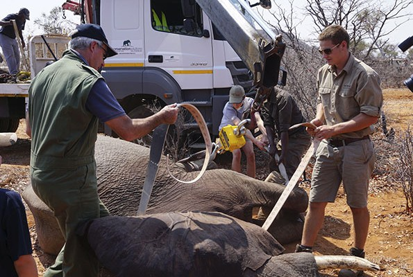 suf_relocation_elephants_2b