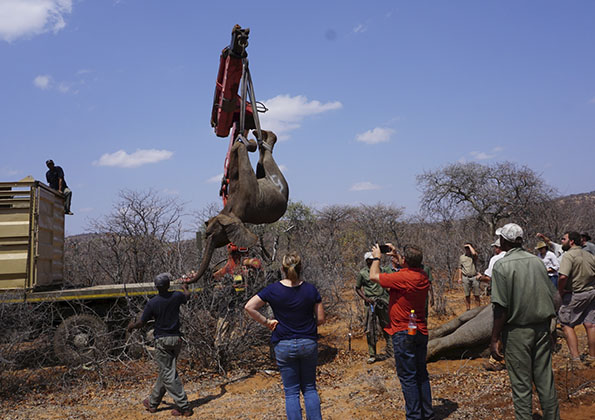 suf_relocation_elephants_3