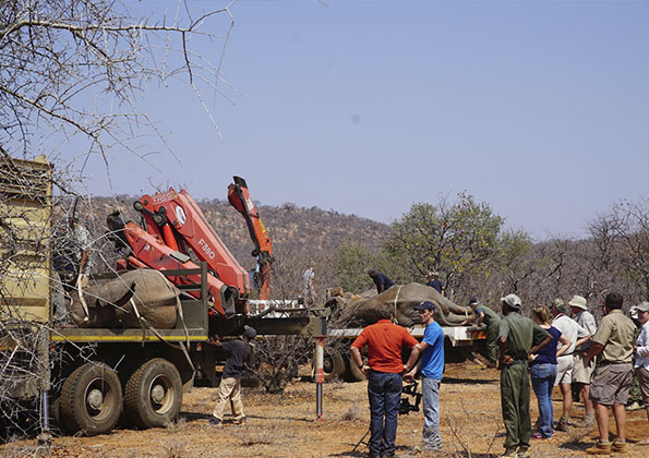 suf_relocation_elephants_5