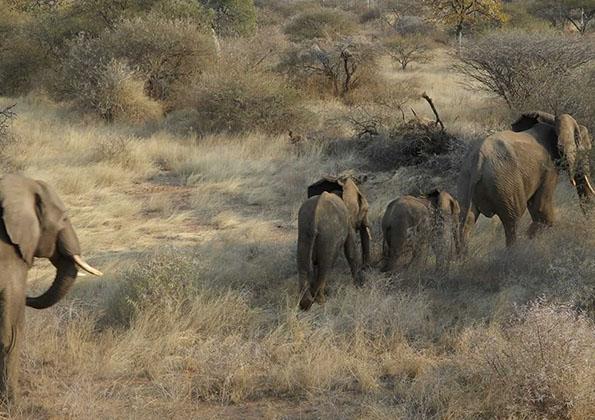 suf_relocation_elephants_9