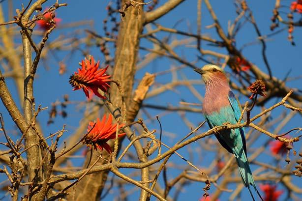 suf_birding