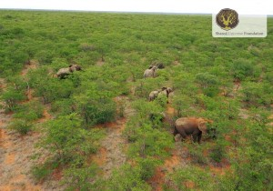 helicopter_shot_elephants_mapesu_2